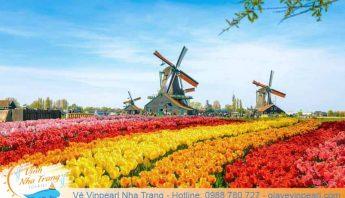 hoa-tulip-ha-lan-festive-vinpearl-land